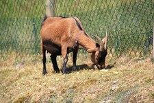Tierwelt in Todtnauberg im Streichelzoo